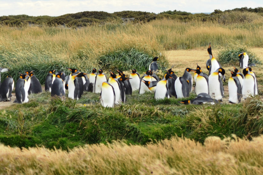 Tierra del Fuego (Punta Arenas-Ushuaia)