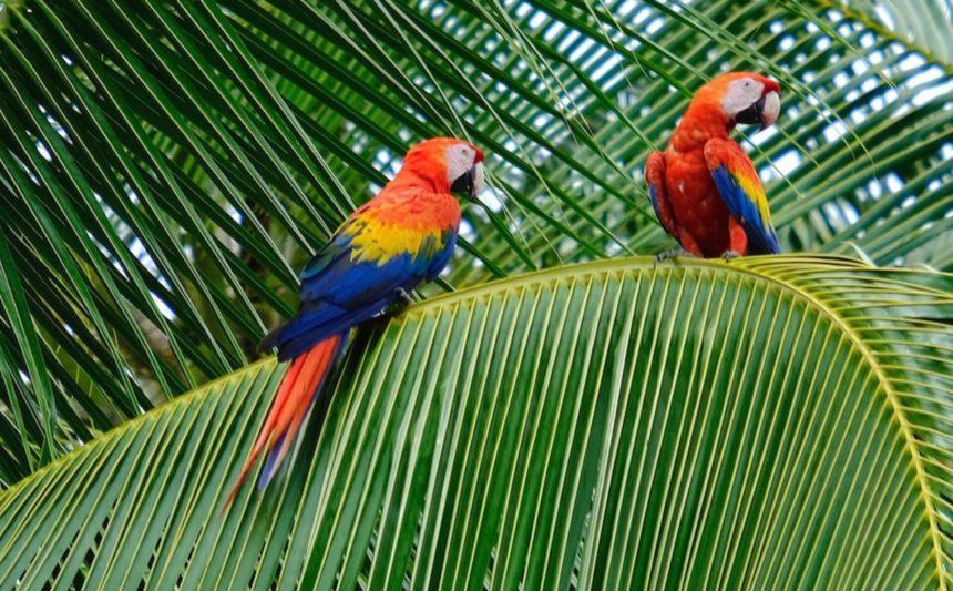 Condividiamo i colori della Costa Rica